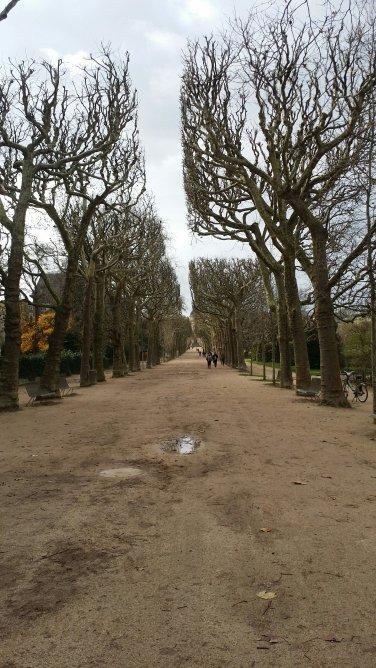 Ciel gris et belle avenue. J'aime de plus en plus arpenter ce jardin